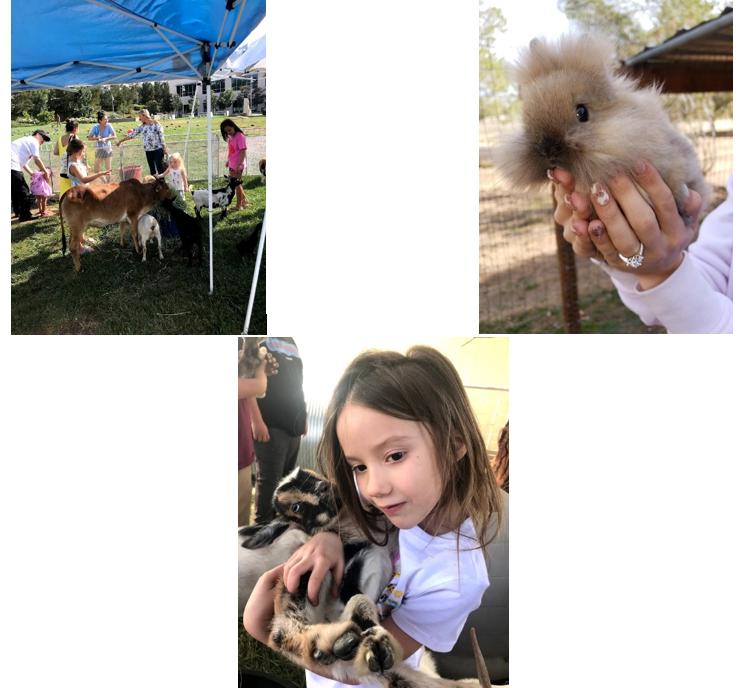 Petting zoo_promo