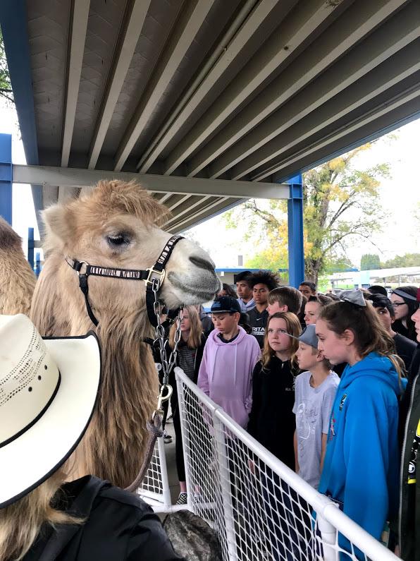 camel presentation