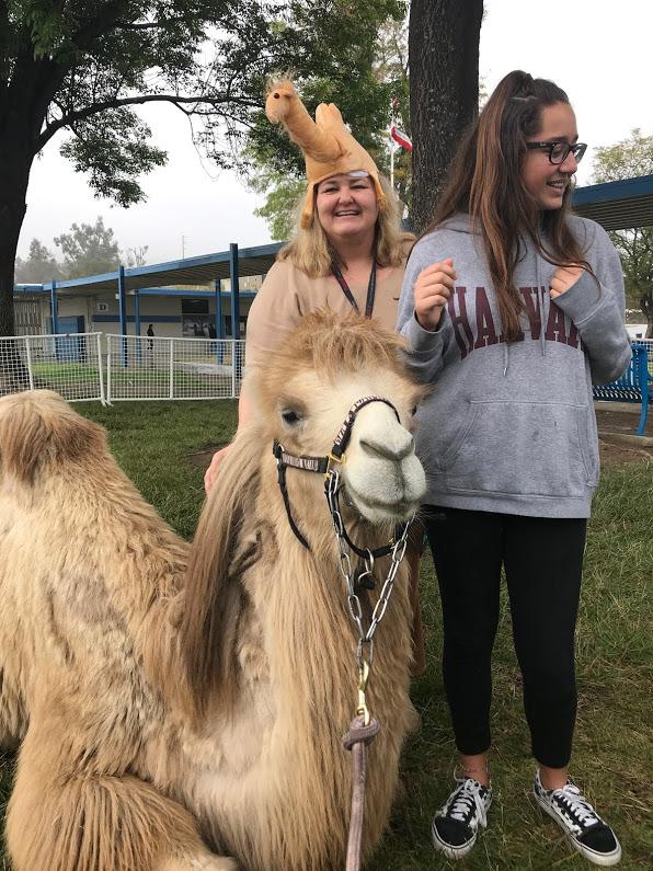 camel presentation2