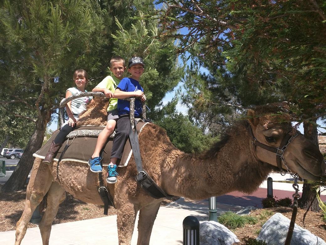 camel ride2