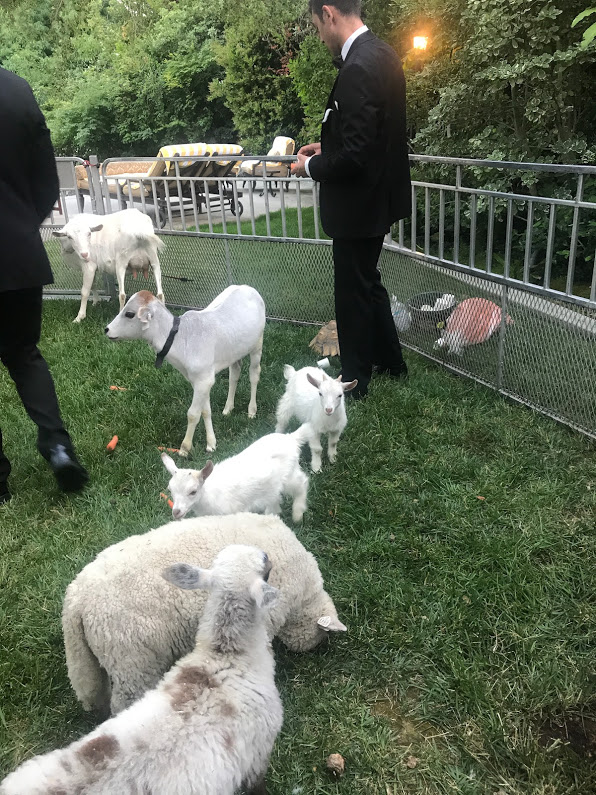 Petting Zoo_Wedding
